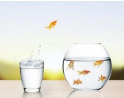 חרדה חברתית | קבוצות | טיפול | מידע | קבוצת מים שקטים